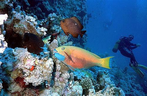 Matkailu sukellusmatkat Source: http://www.flickr.com/photos/thbecker/231670981/
