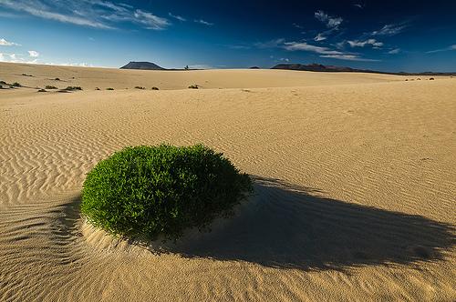 Fuerteventura matkat source: http://www.flickr.com/photos/mark_bowman/5342590702/sizes/m/in/photostream/